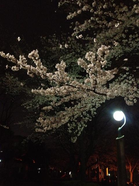 船橋 カイロプラクテック 加圧トレーニング 夜桜①