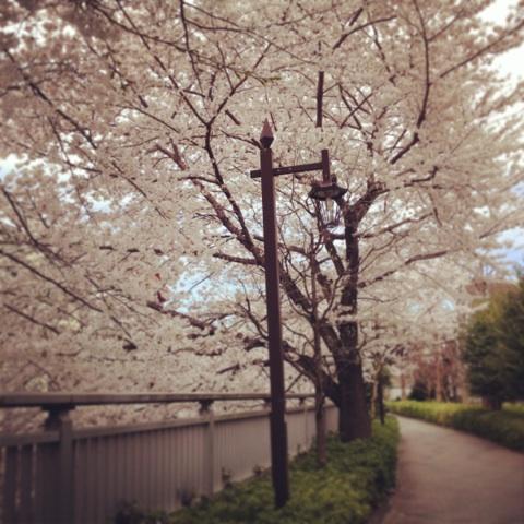 桜 船橋 カイロ 加圧トレーニング
