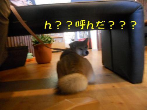 何ですか~~~???