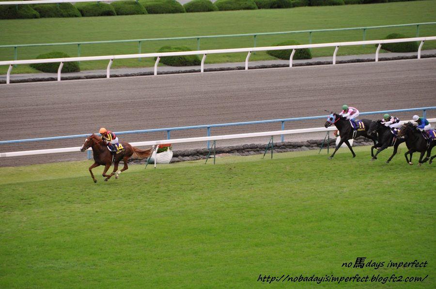 2011菊花賞にて。オルフェーヴル号