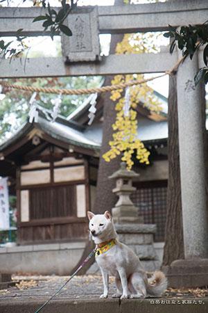 20141124-_MG_6085.jpg