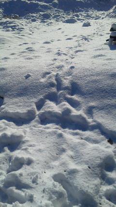 雪2013