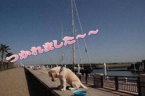 2012・04・28潮芦屋浜4