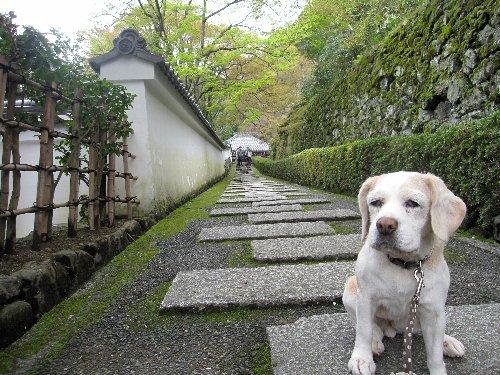 2012・04・21善峯寺5