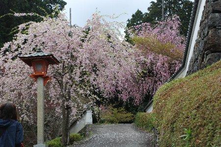 2012・04・21善峯寺2