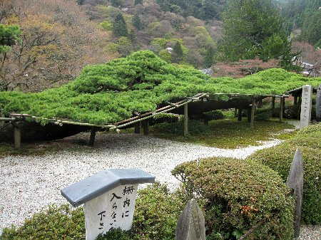 2012・04・21善峯寺3