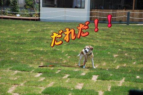 2012・05・27福知山城5