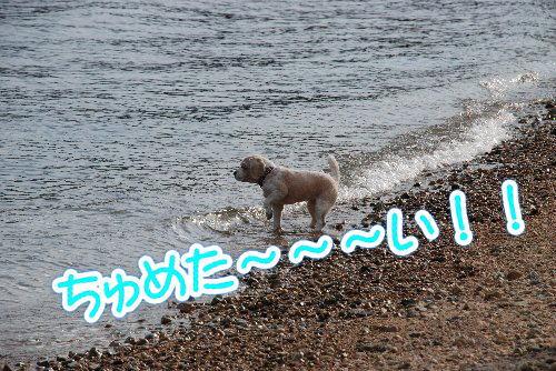 2014・01・01鳴尾浜もっと3