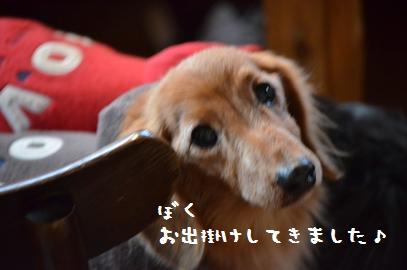 1_20130327134632.jpg