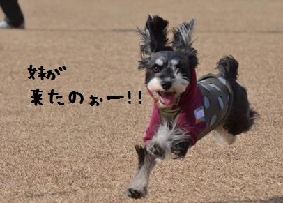 2_20130120191555.jpg
