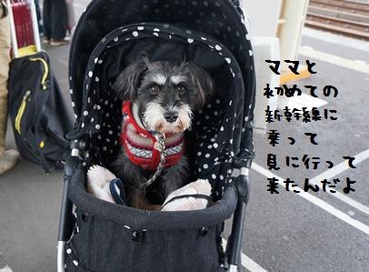 4_20130120191554.jpg
