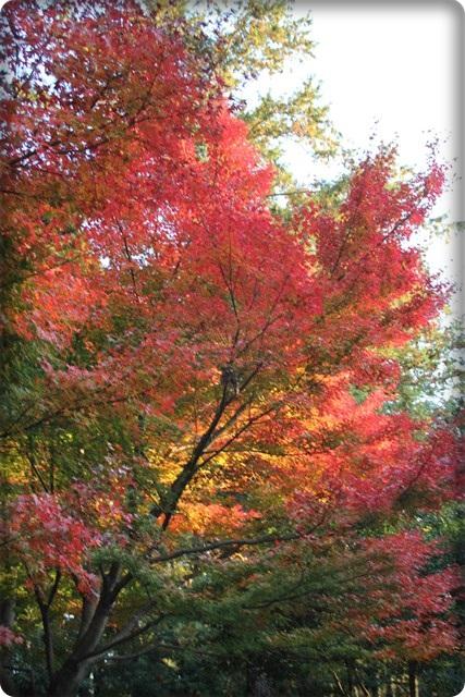 秋のあしあと3