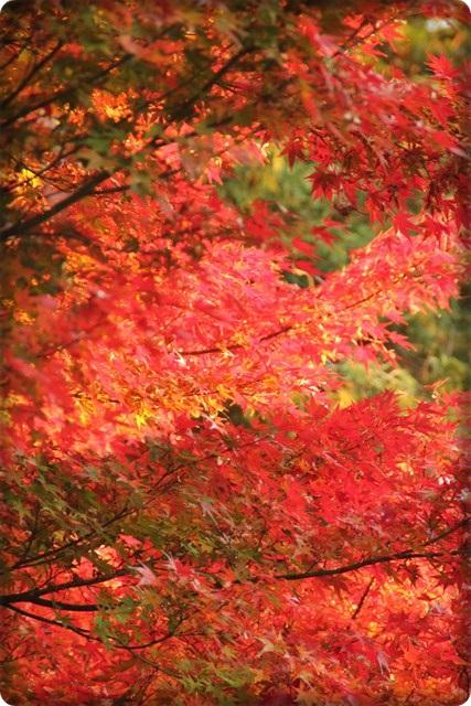 秋のあしあと4