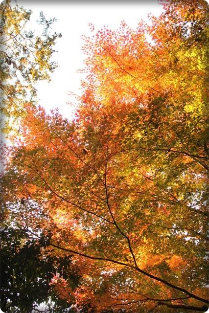 秋のあしあと6