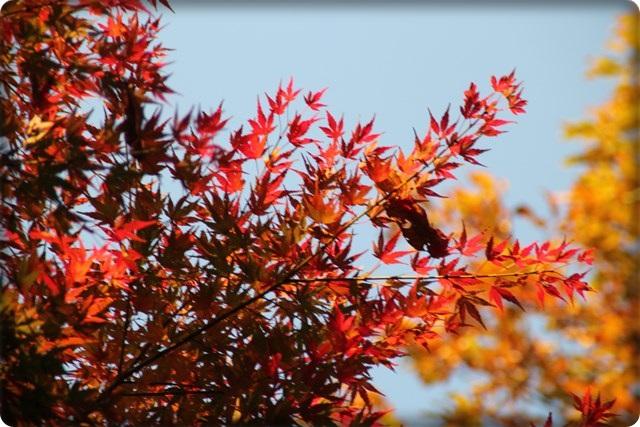 秋のあしあと9