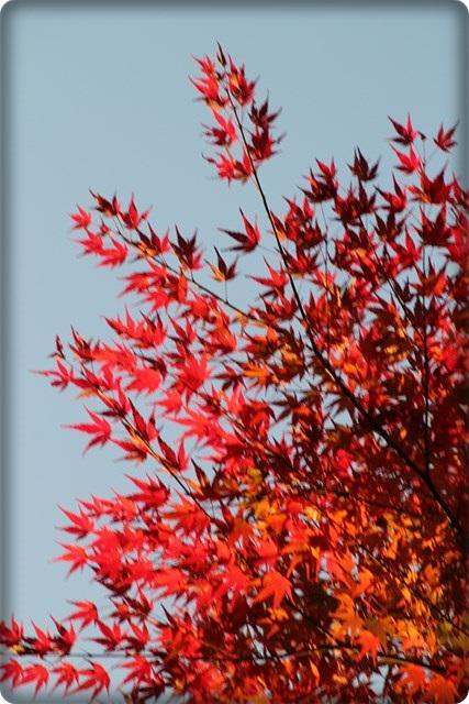 秋のあしあと10