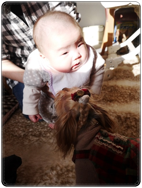 ノンちゃん赤ちゃんに興味津々