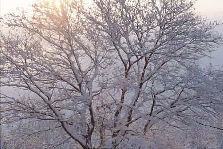 20130109_noririn.jpg