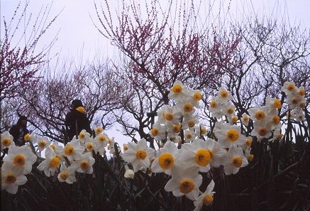 20130318_noririn.jpg