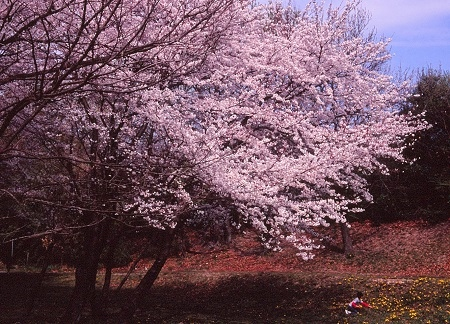 20130405_noririn.jpg