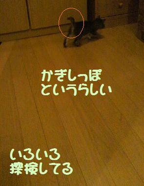 2013611trtanken.jpg