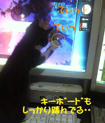 2013616musuneko2.jpg
