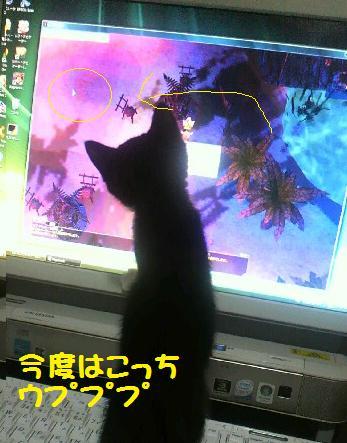 2013616musuneko3.jpg
