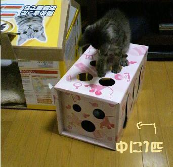 2013623neko1.jpg