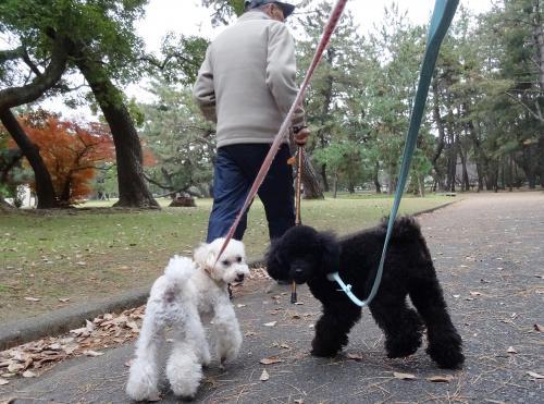 父とお散歩♪