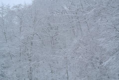 雪の森130114