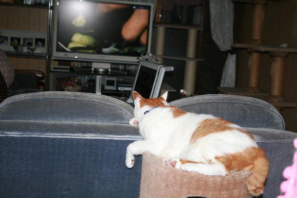 テレビを観るおっさん