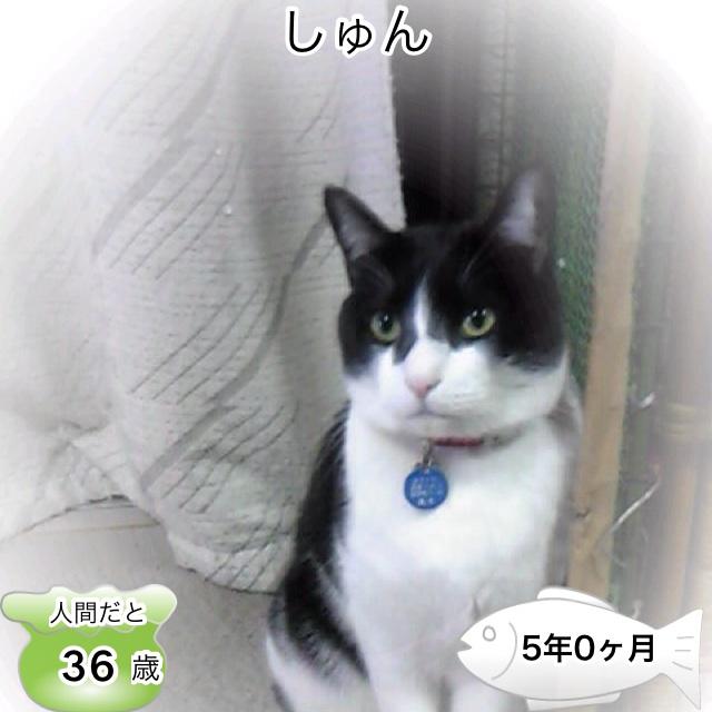 image_20130504012749.jpg