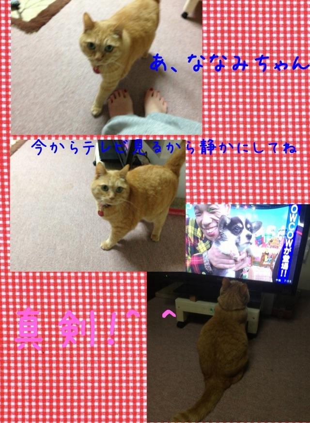 image_20130521225144.jpg