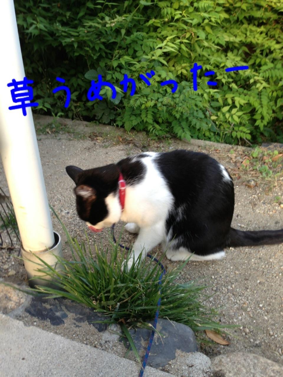 image_20130525000839.jpg