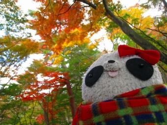ばぶちゃん修善寺自然公園にて2013