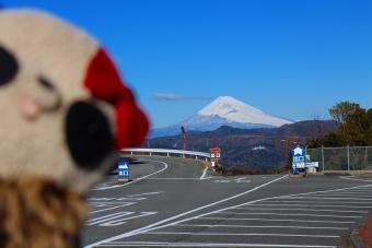シャボテン公園からの富士山
