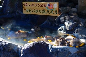 カピバラの露天風呂ゆず湯
