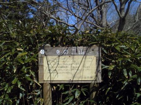 120320きのこ山 (3)