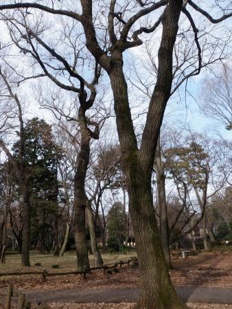 140104井の頭公園 (11)s