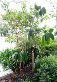 植物レスキュー隊-3_convert_20130413063344