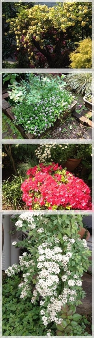満開のお花たち