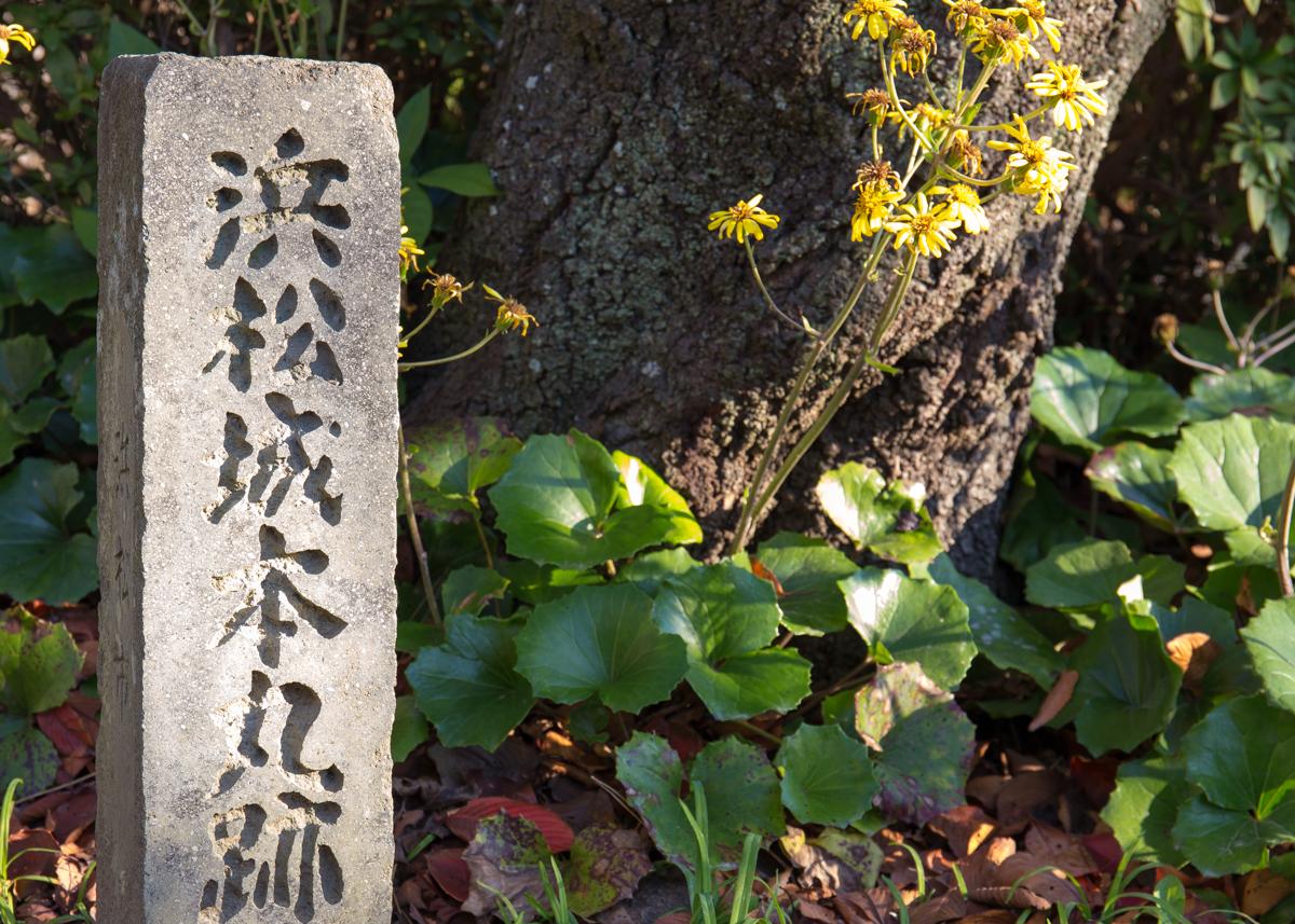 浜松ぶらりひとり旅4(6)