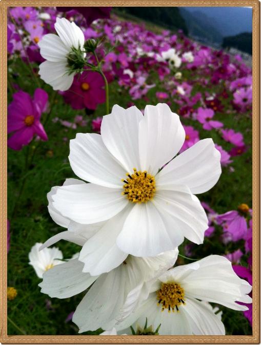 004_20121101201139.jpg
