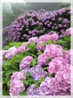 010_20120624113229.jpg