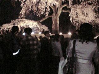 夜桜 01 (2)