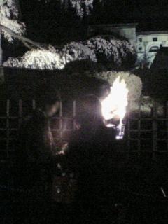 夜桜 02a