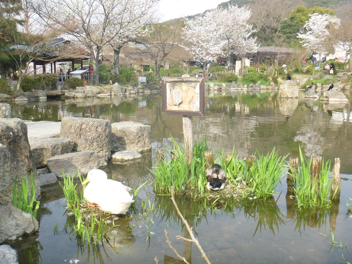 円山 (7)a