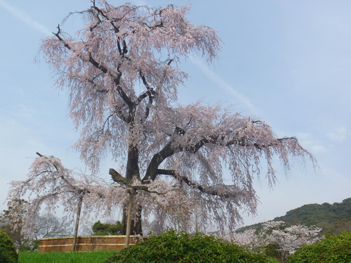 円山 (14)a
