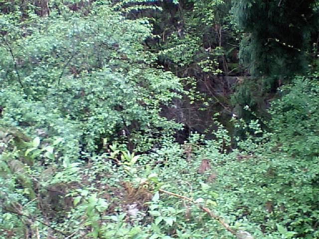 第一隧道 奥山側入口 (1)