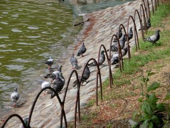 うさんぽ 明石公園7